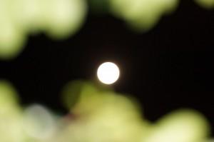 moon00814