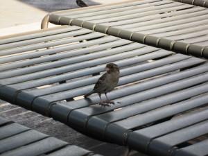 201407200049_07190849_bird