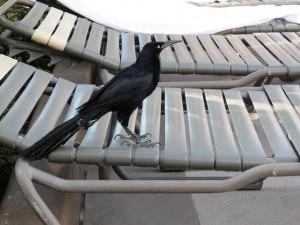 201407200050_07190850_bird