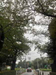 台風【佐藤直子のテニスがすべて】