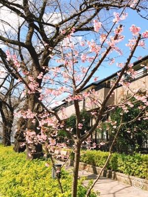 春、見っけ!【ちょい不良オヤジ・西尾茂之の辛口blog】