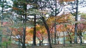 kawamura2