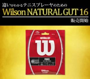 Wilson NATURAL GUT 16 店舗
